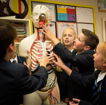 Pupils in biology class with plastic model of human anatomy